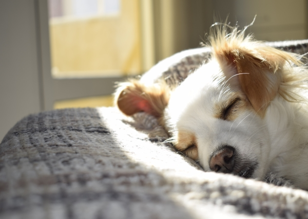 Remove pet hair from carpets