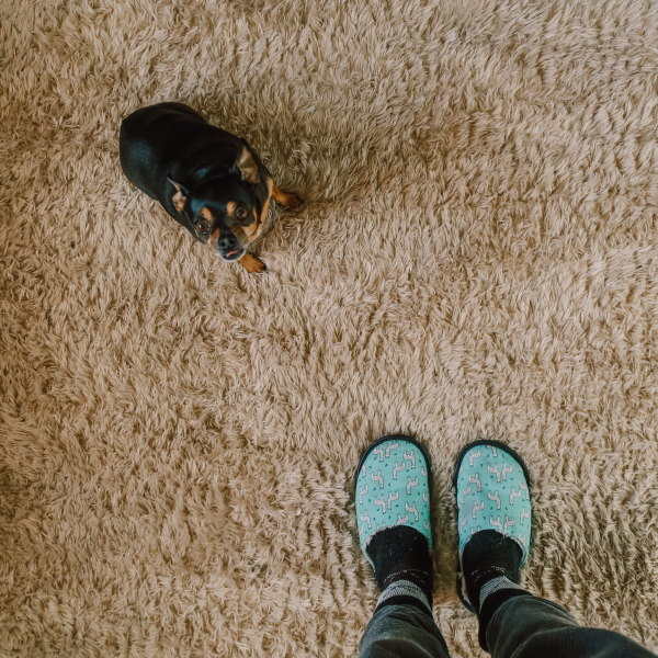 5 Things That Could Ruin Your Rugs and Carpets