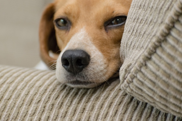 Hacks to Get Rid of Dog Odor in Your Home